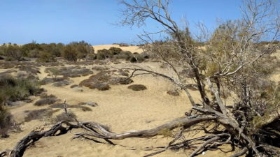 Landkreis: Die Dürre bleibt